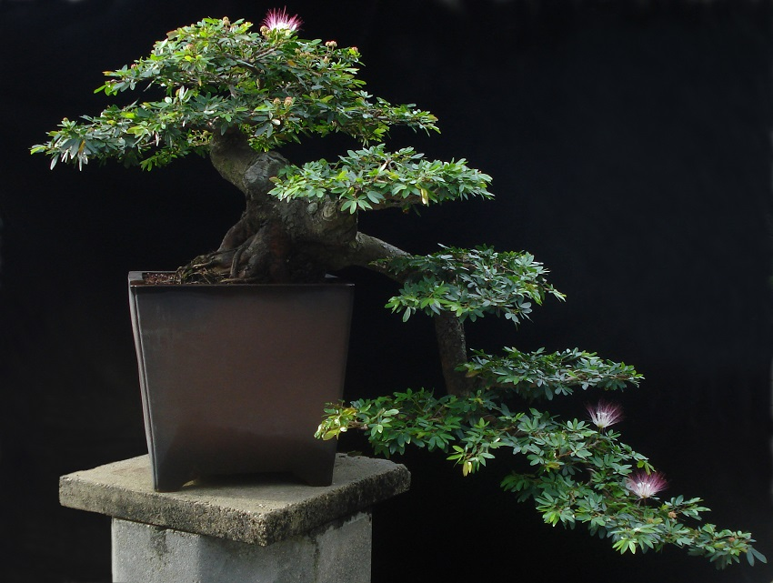 Bonsai Styles Six Main Bonsai Styles The Art Of Bonsai