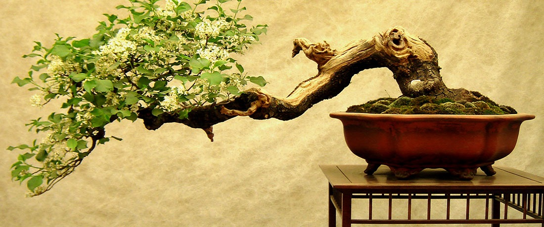 How to Bonsai a Tree